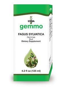Fagus Sylvatica by Unda