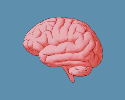 Probiotics Brain